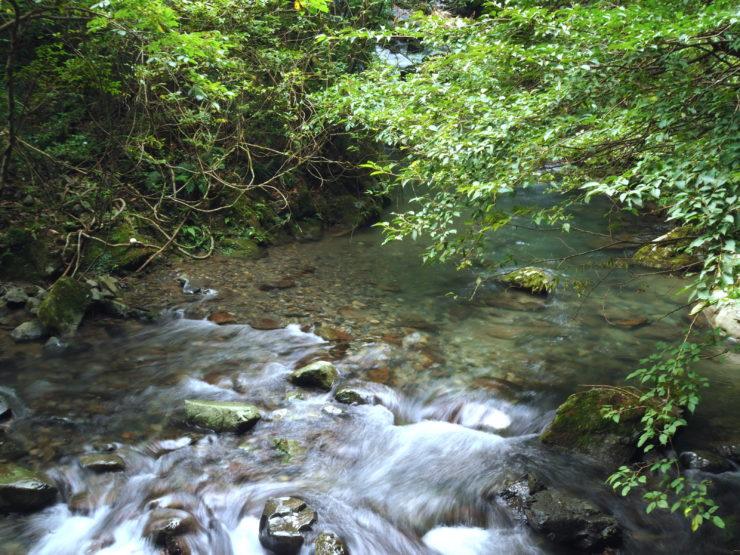 浄化力 日本一の川