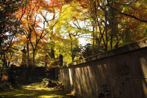 新宮禅寺、秋、紅葉