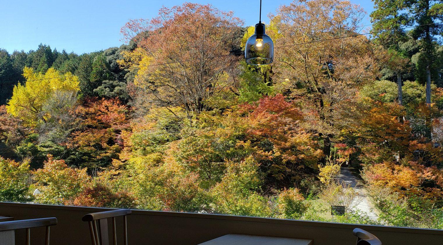 晩秋、新宮禅寺が色付きました。