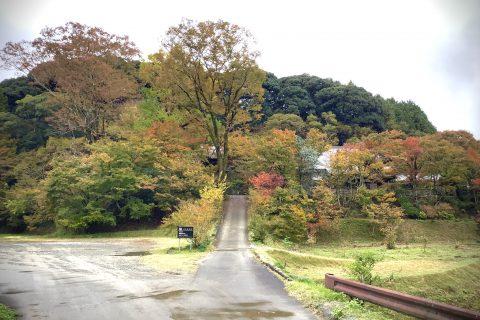 秋 今朝の新宮禅寺の森